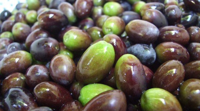UN ANNO DA DIMENTICARE per gli olivicoltori